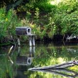 Bruthöhle für Wildenten in einem Gartenteich