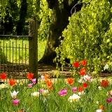 Gartenidylle im Frühjahr