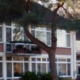 Bizarr gewachsene Kiefer in der amerikanische Siedlung in Bonn