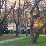 Anmutig gewachsener Obstbaum in der amerikanische Siedlung in Bonn