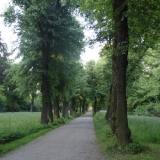 Barocke Lindenallee im Belvedere, Weimar